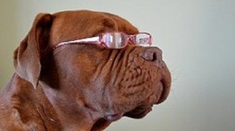 How To Treat Cataracts In Old Dogs